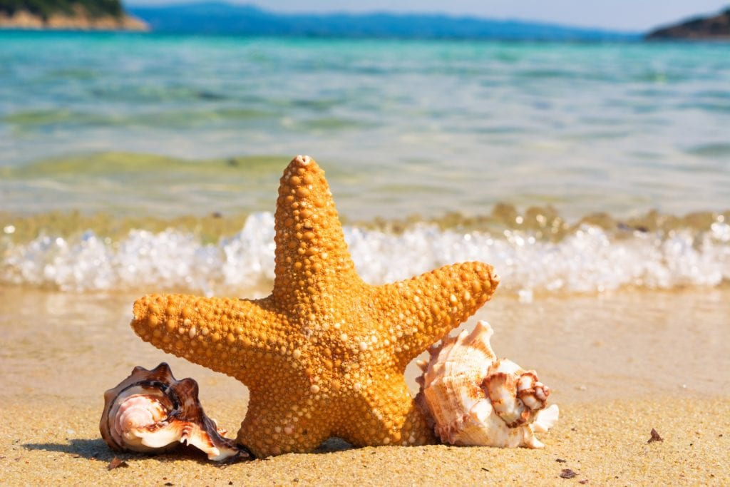 animal-beach-coast-414105
