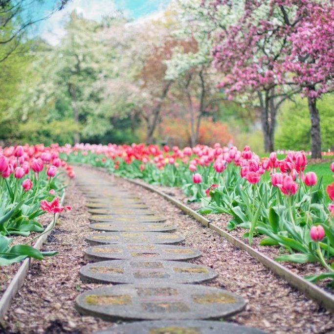 beautiful-bloom-blooming-414160 (1)